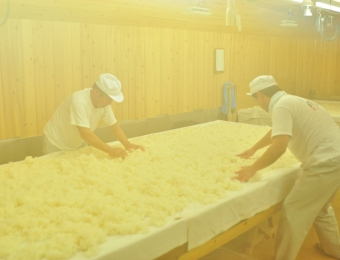 Steamed Rice on the table in Koji Room