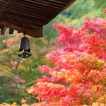 A-roof-with-a-small-bell-and-a-colorful-maple-tree-leaves-000016436397_Small